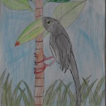 A Toucan by Matthew (click for larger image)